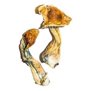 B Magic Mushroom