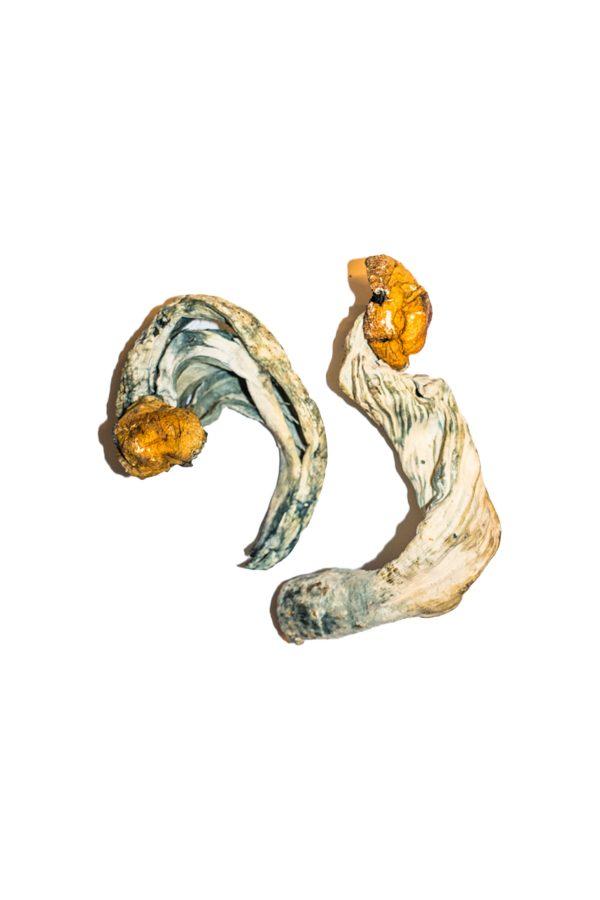 Ecuadorian Magic Mushroom 2