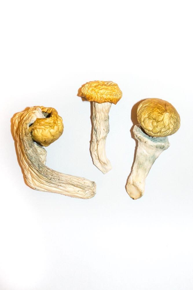 Penis Envy Magic Mushrooms 2