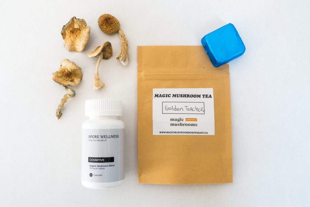 First Timer Magic Mushroom Kit 1