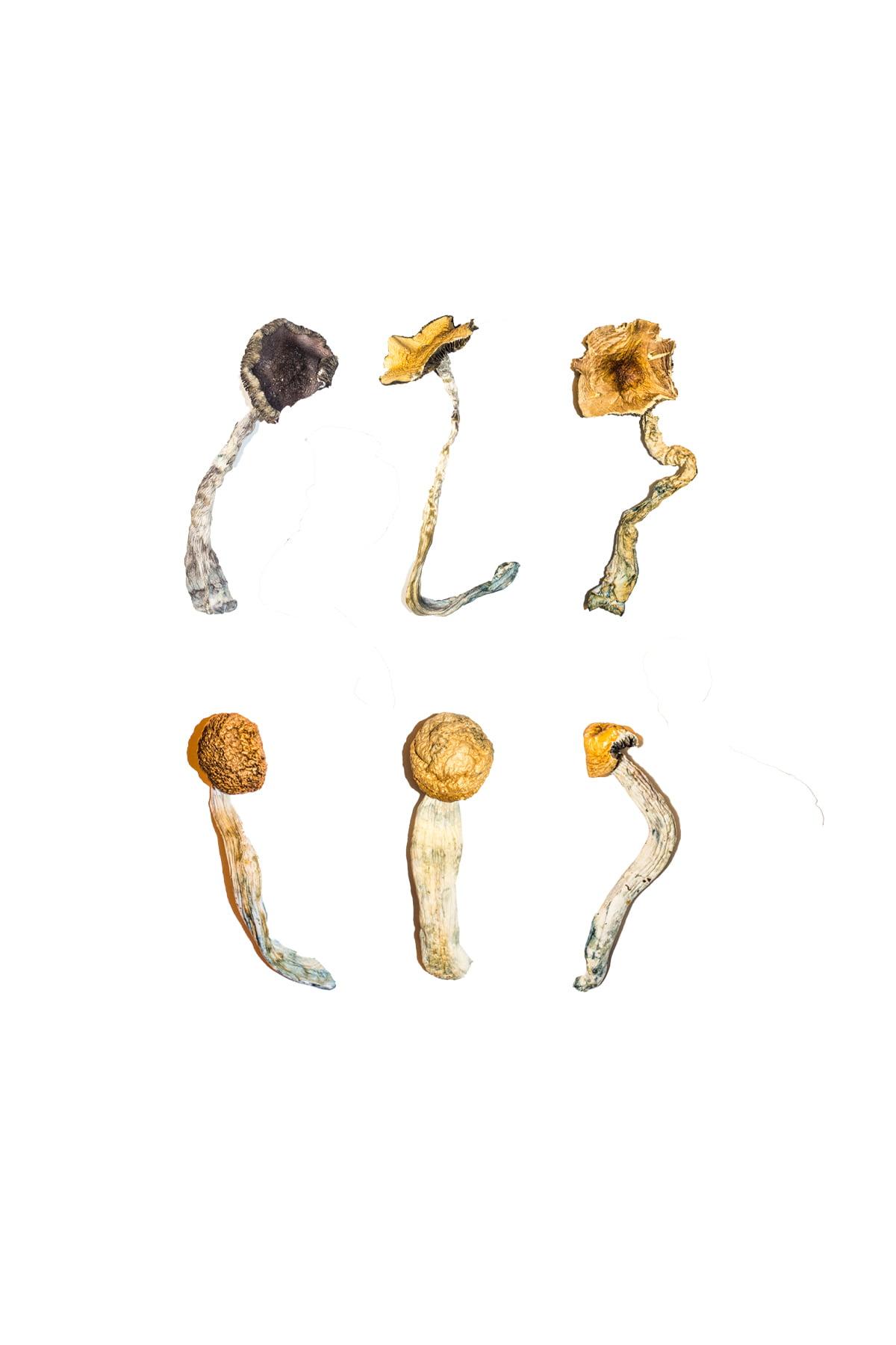 Magic Mushroom Sampler Kit Tasting Menu