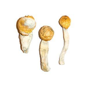 Penis Envy Magic Mushrooms 3