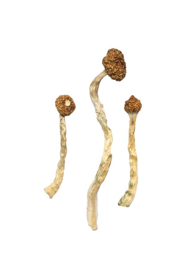 Arenal Volcano Magic Mushrooms