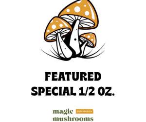 Featured Special 'Half Oz' Magic Mushrooms (14 grams)