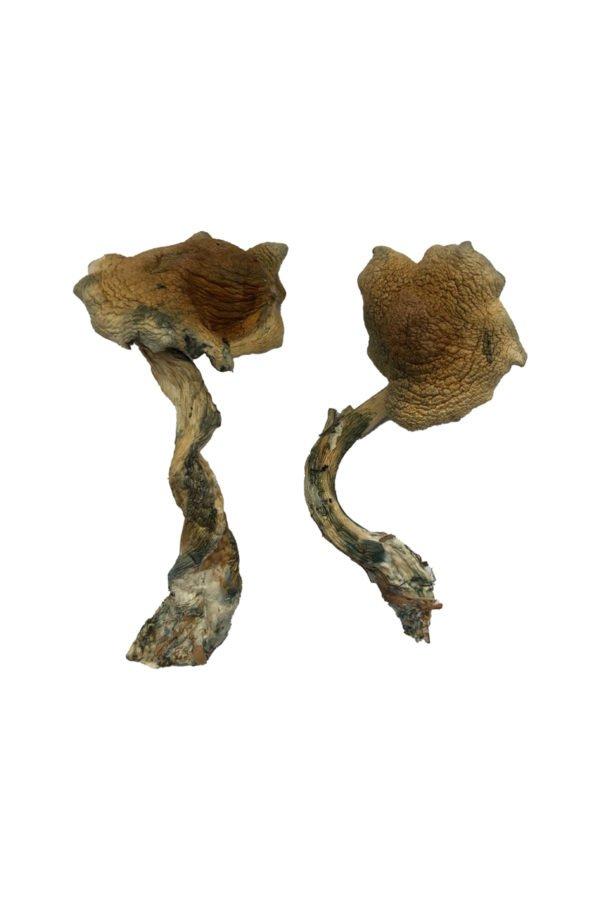 Alacabenzi Shrooms