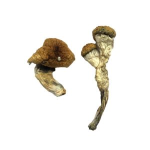 Amazonian Magic Mushrooms