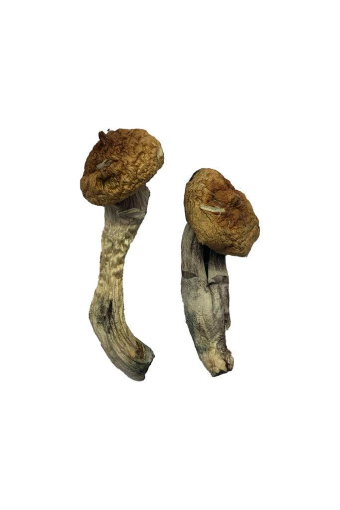 Amazonian Shrooms