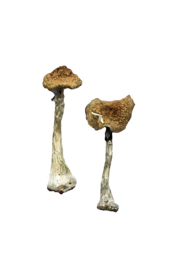 A Magic Mushrooms