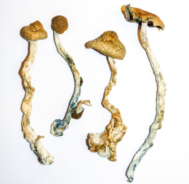 Our Top 5 Selling Magic Mushroom Strains and Why