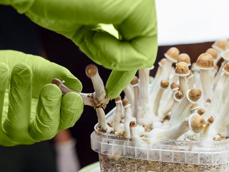Magic Mushrooms Can Help Reduce Inflammation and Depression