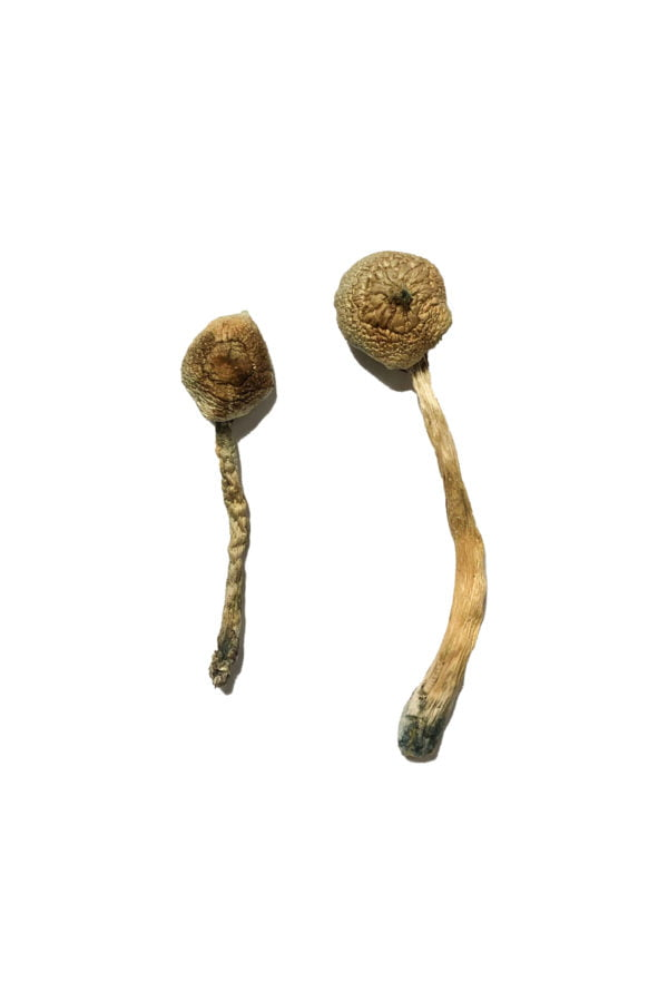 Rusty Whyte Shrooms