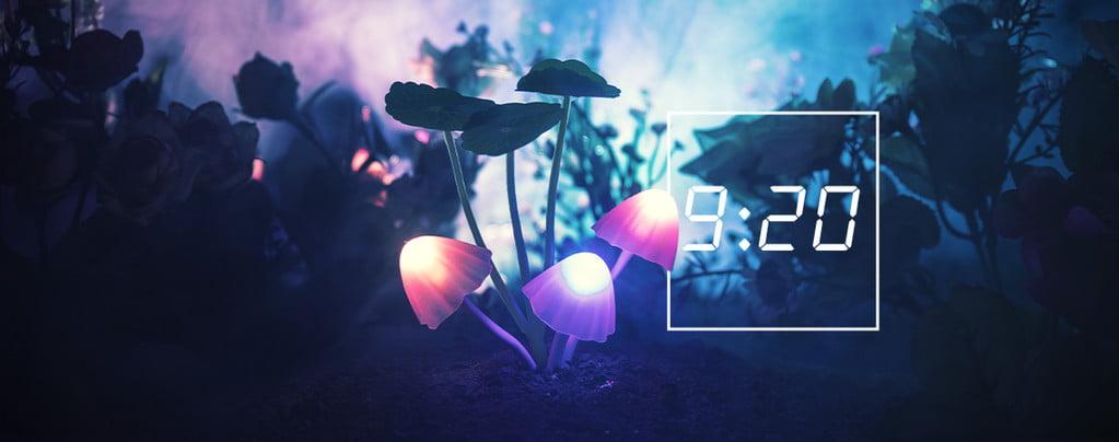 920 magic mushroom day 1