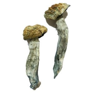Mazatapec Magic Mushrooms