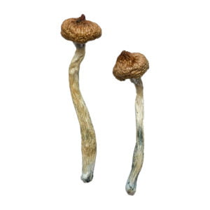 Escondido Magic Mushrooms photo 1