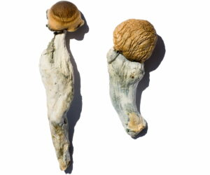 Trans Envy Magic Mushrooms