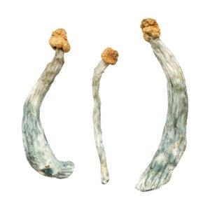 Creeper Magic Mushrooms
