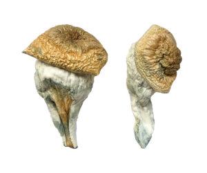 Mystery Fatass Magic Mushrooms